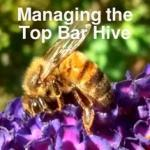 managing the top bar hive