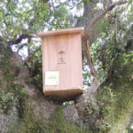 tree hive bee nest box