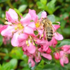 Bee Day: Tues 31 March