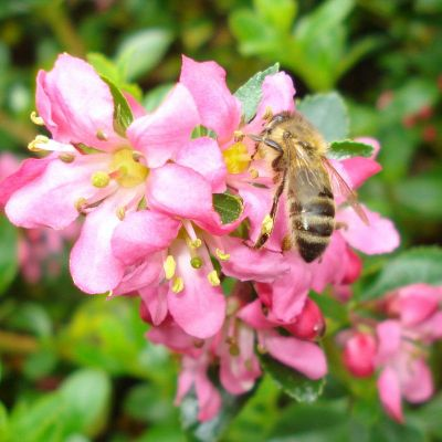 Natural Beekeeping 3 May (Adult)